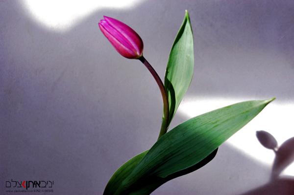צילום פרחים באור טבעי עם משחק של אור וצל